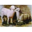 CL Series - Two Lambs