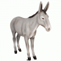 Exclusive Series - Donkey