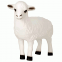 Exclusive Series - Sheep (Head Up)