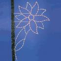 10' Poinsettia