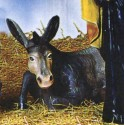 CL Series - Donkey