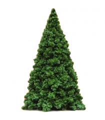 Northwest Conifer Tree